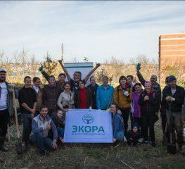 Эко-общественники Ставрополя восстанавливают лес в урочище «Мутнянка» краевой столицы